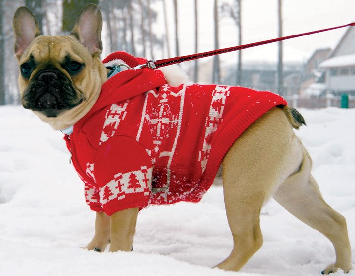 Worry Free Winter for your Pets