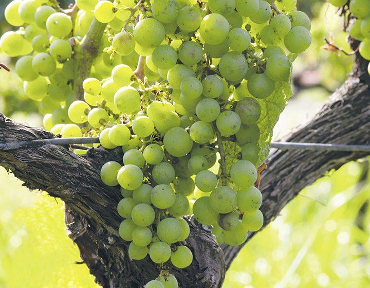 East End Wineries